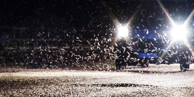 Birgün sineklerinin ölüm dansı başladı