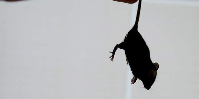New York'ta farelerle 32 milyon dolarlık mücadele