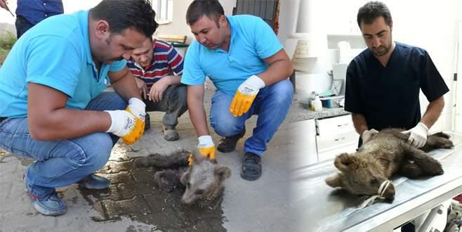 3 aylık yavru ayı açlıktan ölmek üzereyken bulundu