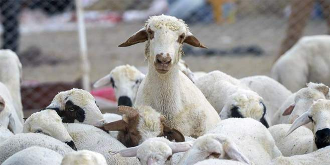 Küçükbaş hayvancılık daha çok desteklenmeli