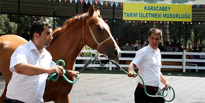 Bursa'da yarış tayları daire fiyatına alıcı buldu