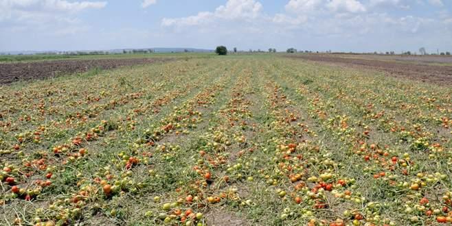 Erdem: Miraslı araziler çiftçiyi mağdur ediyor