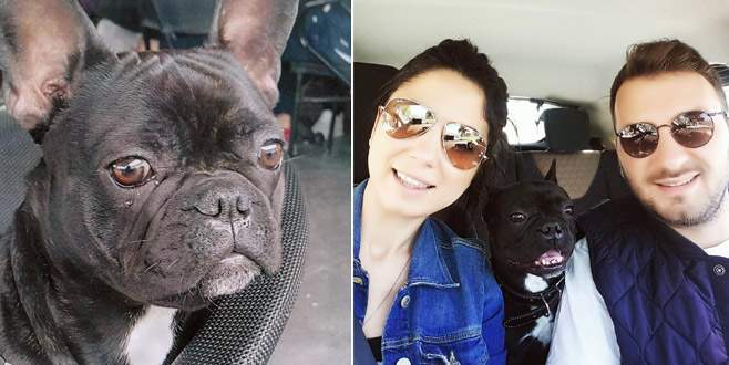 Bursa'da kaybolan köpeğini el ilanı ile arıyor