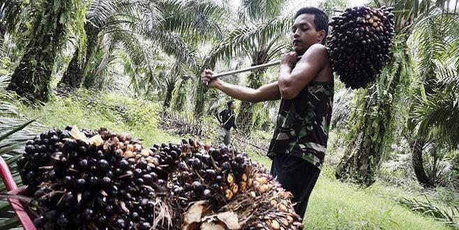 Tüketici palm yağı raporunu bekliyor
