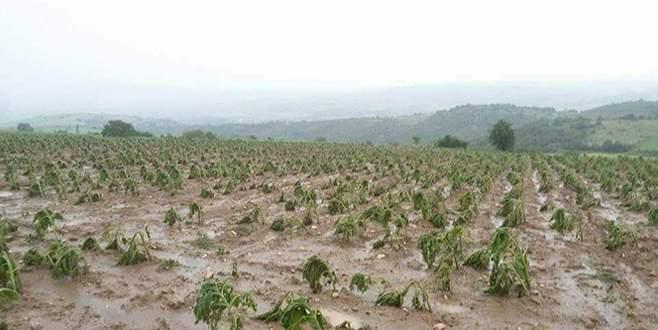 'Çiftçinin zararı karşılanmalı'