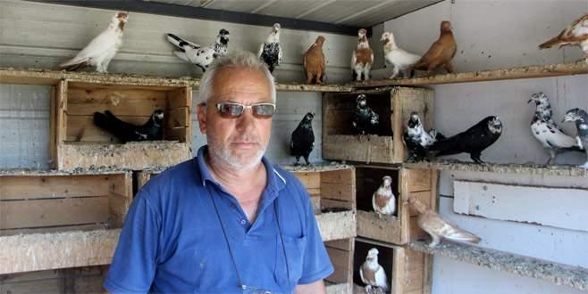 Bursa'da çocukları gibi baktığı kuşlarını çaldılar