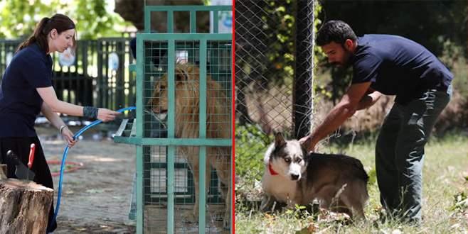 Suriye'deki yabani hayvanların Bursa'ya nakli sürüyor