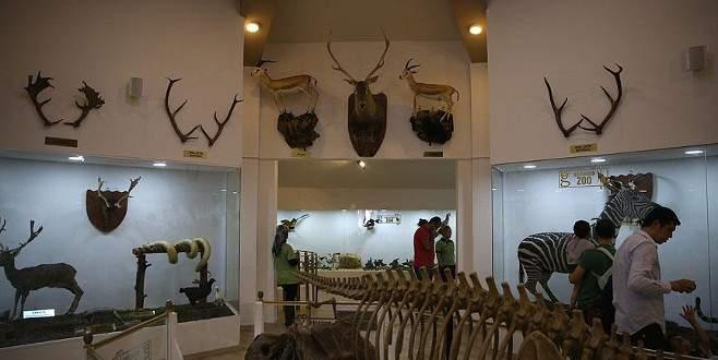 Türkiye'nin ilk Zooloji ve Doğa Müzesi ziyaretçi akınına uğradı
