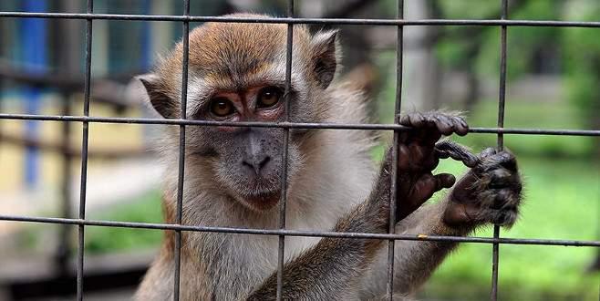 Maymun istilasıyla asker mücadele edecek
