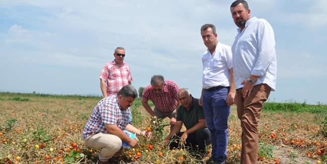 Tarım Komisyonu'ndan ovada hasar incelemesi