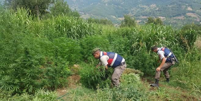 Bursa'da hayvan çiftliğinde uyuşturucu operasyonu