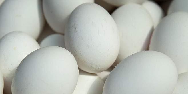 Belçika'da da 'böcek ilaçlı yumurta' çıktı