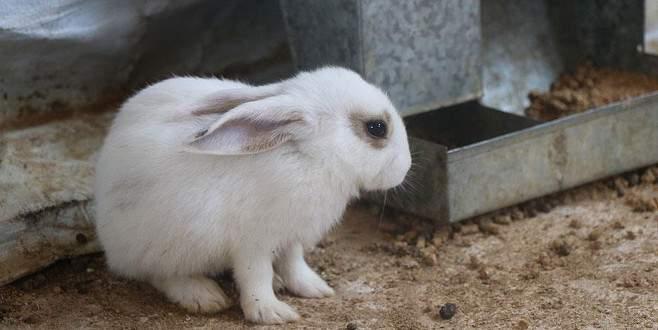 Suriye'de tavşan çiftliği kuruldu