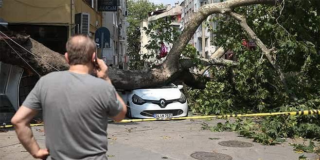 Bursa'da anıt çınarın kırılan dalı otomobilin üzerine düştü