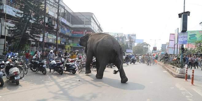 Hindistan'da fil 14 kişiyi öldürdü