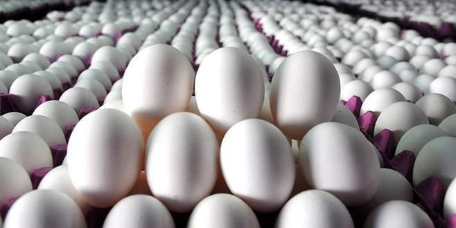 'Almanya Hollanda'dan 5 milyar adet yumurta aldı'