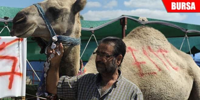 700 kiloluk deve alıcısını bekliyor