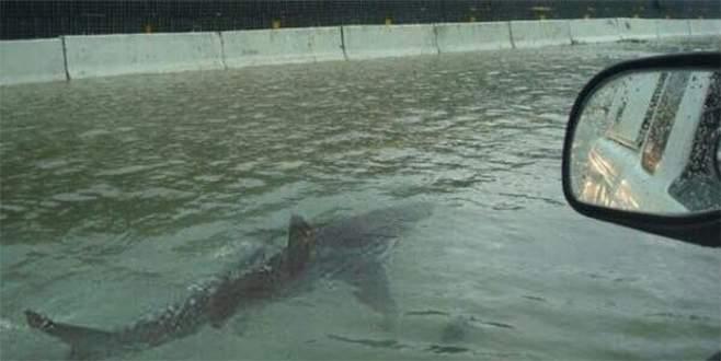 'Otobanda yüzen köpek balığı' Fox News'e özür diletti