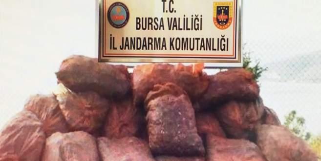 Jandarma ekipleri Bursa'da 22 ton kaçak midye ele geçirdi