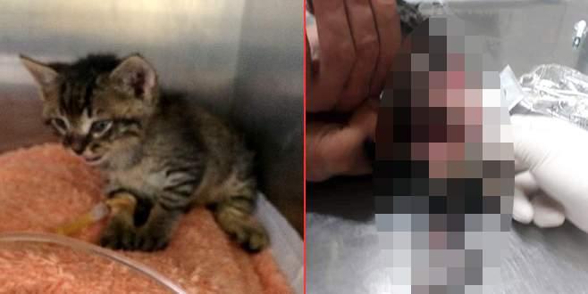 Yavru kediye akıl almaz işkence!