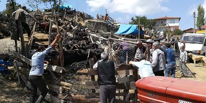 Büyükorhan'da kurbanlıklar pazara indi