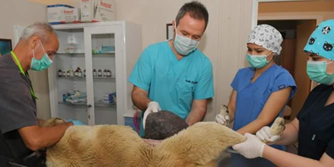 Binlerce hayvan Osmangazi'de sağlığına kavuşuyor