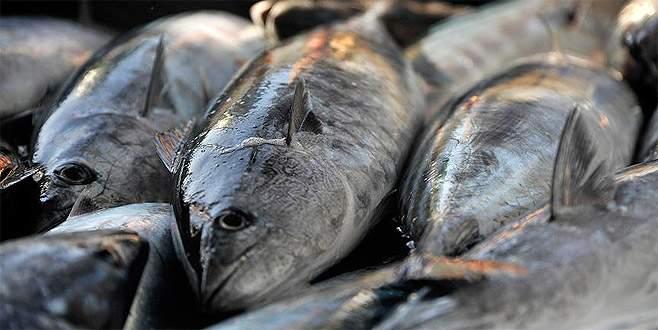 Balıkçılardan sevindiren haber