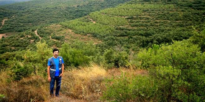 Orman varlığı artıyor