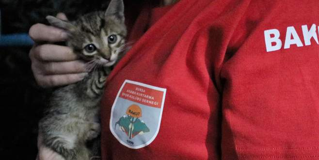 Metro istasyonunda kedi kurtarma operasyonu