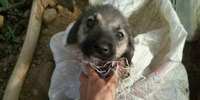 Çuvaldan gelen sesler yavru köpeğin hayatını kurtardı