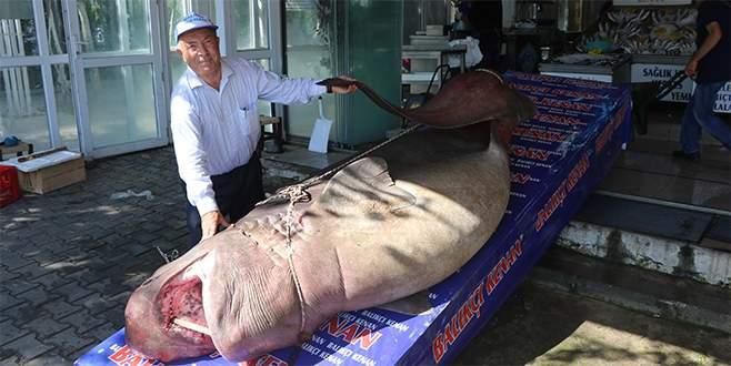 Marmaralı balıkçılar gözlerine inanamadı