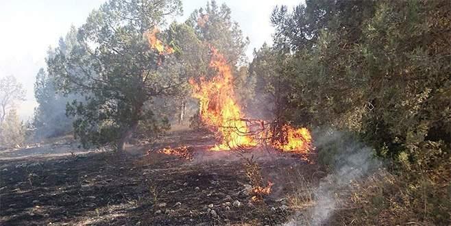 Evdeki yangın ormana sıçradı