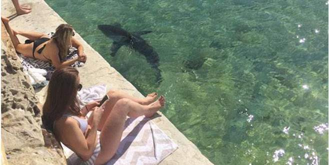 Köpek balığı kıyıya kadar geldi! Kimse yerinden kıpırdamadı