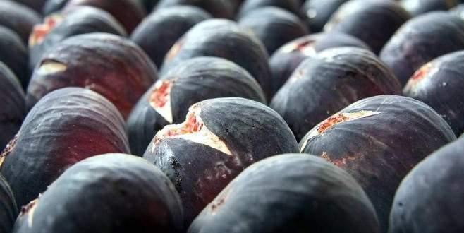 Siyah incir üreticisine '10 günlük tatil' darbesi