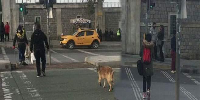 Köpek öğrendi insan öğrenemedi!