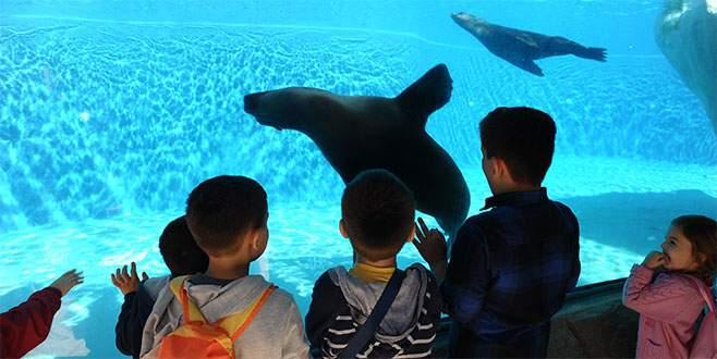 Hayvanat bahçesinin gözdesi penguen ve foklar