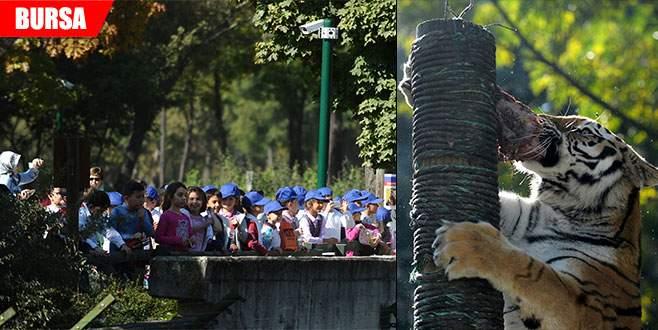 Sonbaharda hayvanat bahçesine büyük ilgi