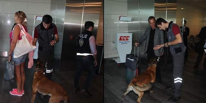 Türk yolcuların köpekle aranmasına misilleme