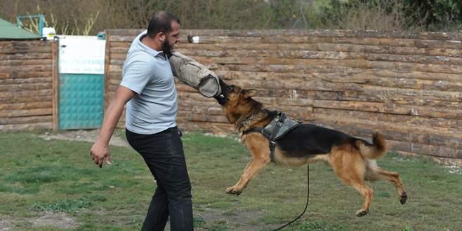 Sayaç okuyanlara köpek eğitimi
