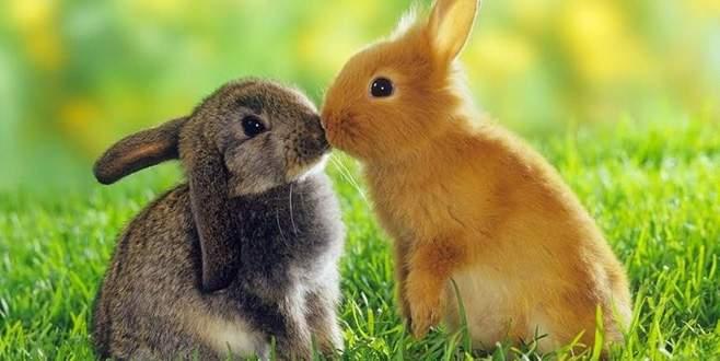 Sağlık Bakanlığı önerdi: Tavşanlar gibi sevişin