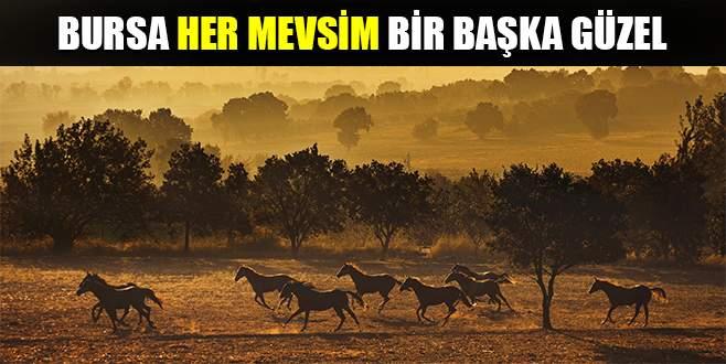 Bursa'da güz böyle görüntülendi