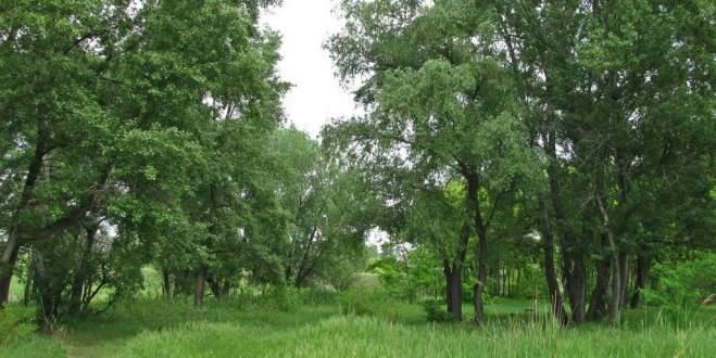 Bu ağaçlar Tweet atıyor