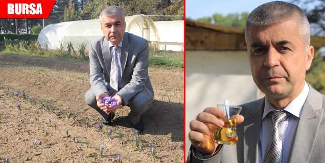 Çiftçiye alternatif ürün: Safran