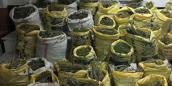 Diyarbakır'da 744 kilogram esrar ele geçirildi