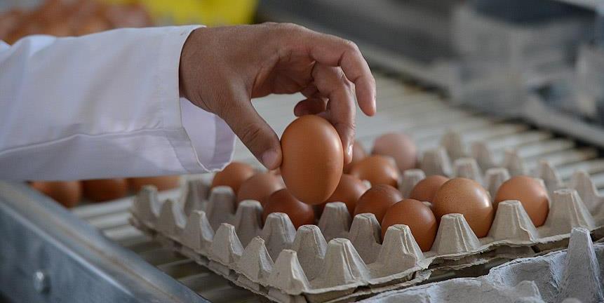 Köy yumurtası 'hilesi' bitecek