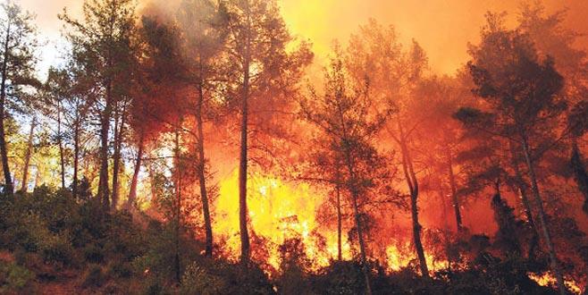 Yazın yanan ormanlık alanlar baharda yeşerecek