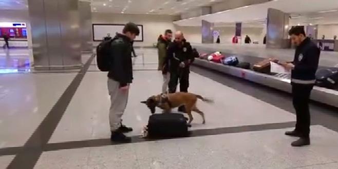 Hollanda'daki köpekli aramaya Atatürk Havalimanı'nda karşılık