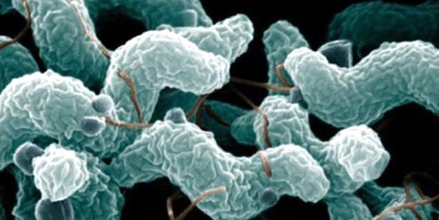 Et yiyen bakteri paniği! Yüzlerce kişiye enfeksiyon bulaştı
