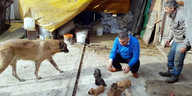 'Hayvansever savcı' hayvanları besledi