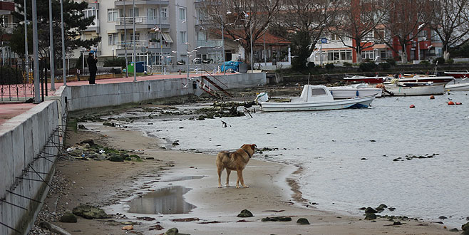 Yalova'da deniz suyu 10 metre çekildi